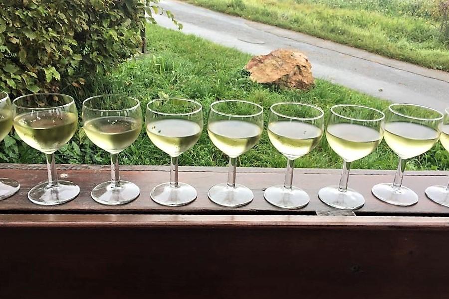 Authentische Weinprobe im Weinberg