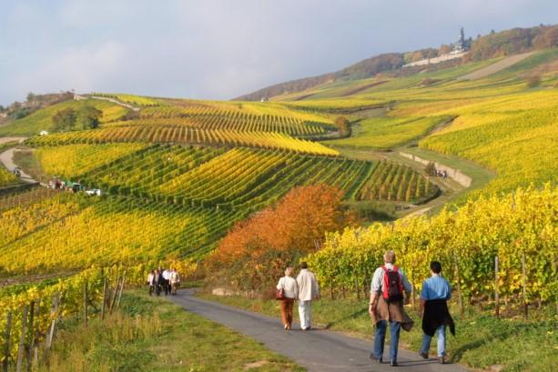 Wanderer Rheingau